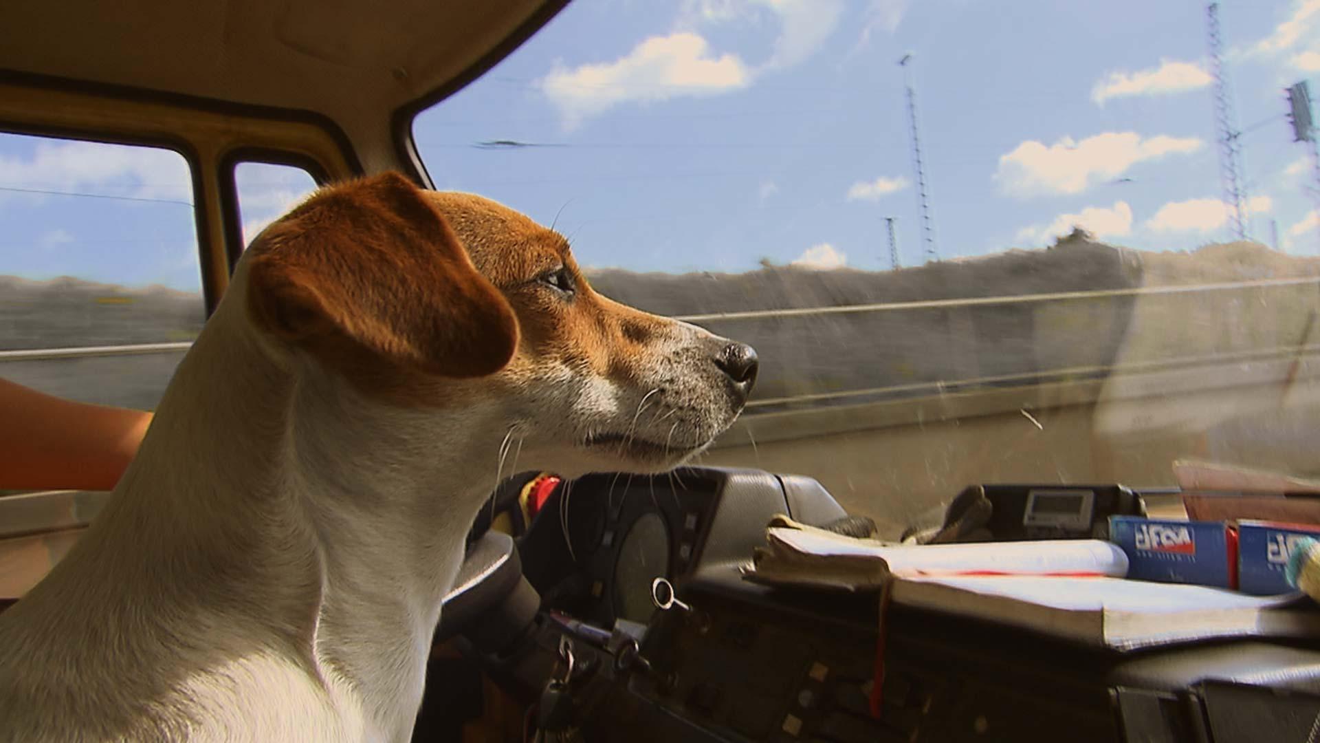 Hund sitzt im LKW und blickt aus dem Fenster